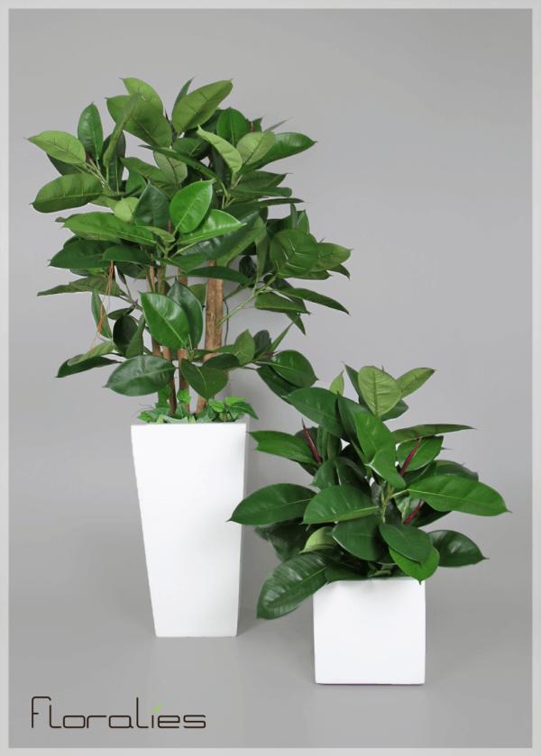 Ficus elastica artificiel